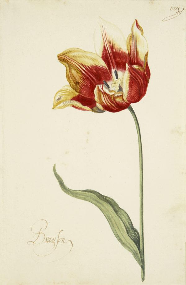"""Great Tulip Book: Branson Archival Digital Print (11"" x 14"" mat)-0"