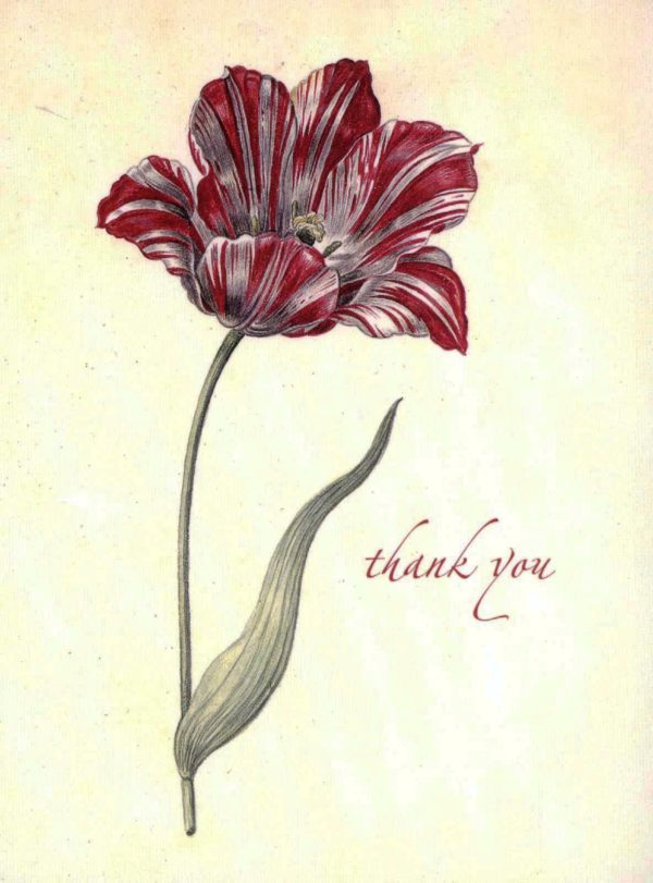 Dutch Tulip Boxed Thank You Cards-0