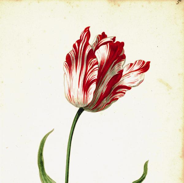 """Great Tulip Book: Admirael de Gouda"" Paperweight-0"