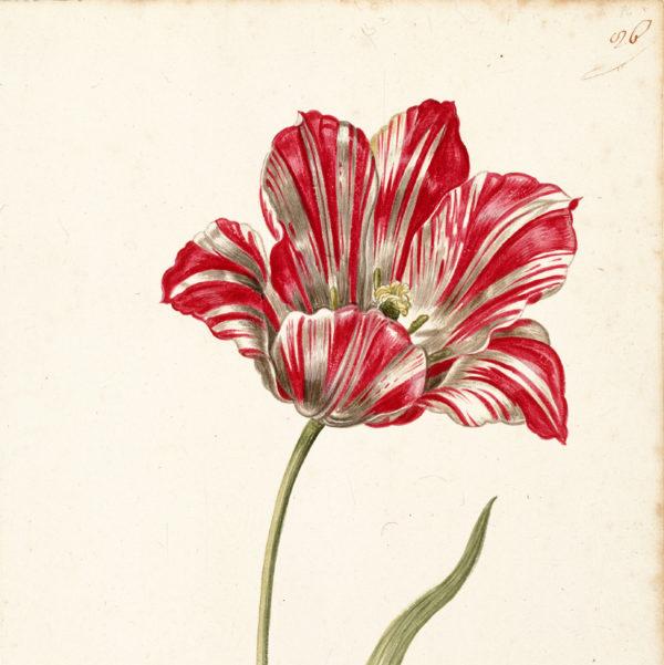 """""""Great Tulip Book: Kamelot Van Wena"""" Paperweight-0"""